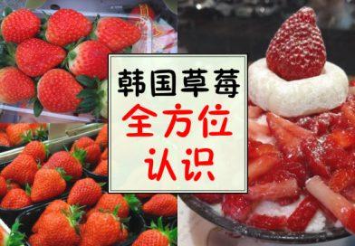 草莓控的天堂!韩国草莓新品种,让你吃一口就爱上!
