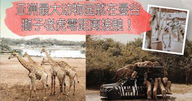 《泰国》亚洲最大Safari 动物园在曼谷!与狮子老虎零距离接触!