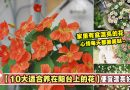 【10大适合放在阳台上养的花】便宜漂亮好养!