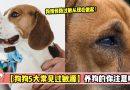 狗狗5大皮肤过敏源,教你如何省了兽医费也让狗狗健健康康!【养狗的你必看】